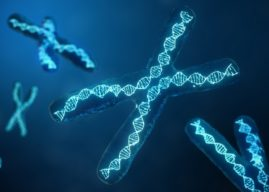 13 Interesting Chromosome Facts and Scientific Revelations