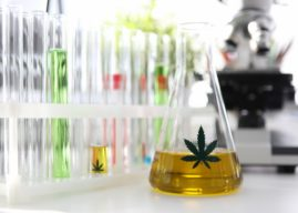 9 Scientific Facts to Know About Cannabis Oil and Cancer